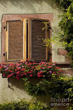 Brian Jannsen - Riquewihr Window