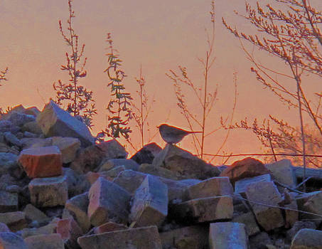 Rise above the Rubble by Suz Anne Wipperling