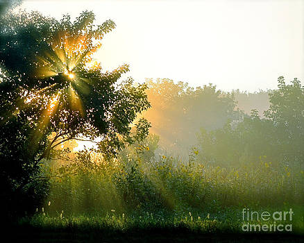 Rise and Shine by Sue Stefanowicz
