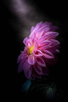 Rise To The Challenge by Paul Barson