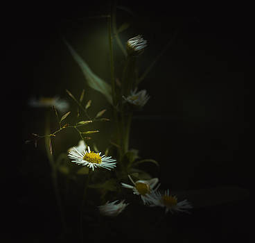 Rise To The Top by Paul Barson