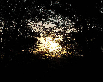Rising Sun through Trees by Kate Johnson