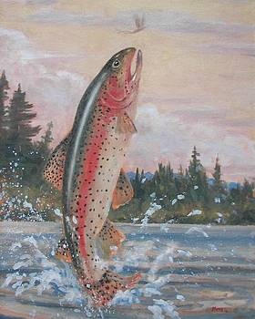 Rising Trout by Robert Stump
