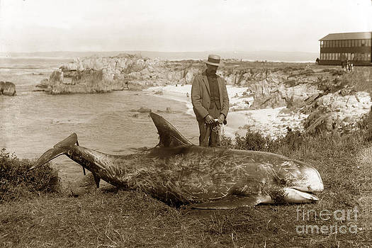 California Views Mr Pat Hathaway Archives - Rissos dolphin Grampus griseus circa 1892