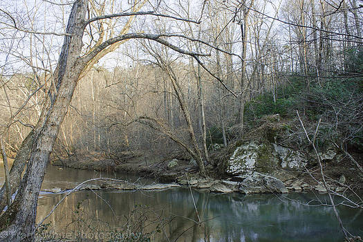 River Bank on the Eno by Frank White