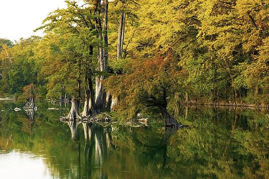 Robert Anschutz - River Cypress II