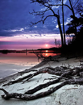 River Forest Sunset Exposed Twisted Tree Roots Beach Art Prints by Eszra