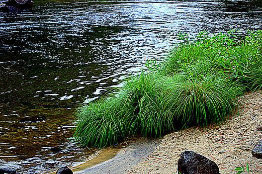 Lynn Bawden - River Grass