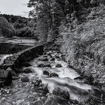 Thomas Schreiter - River Mulde