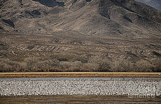 River of Geese by Dee Johnson