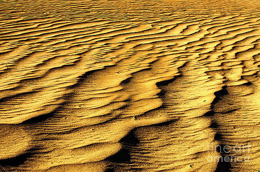 River of Gold by Diana Vitoshka