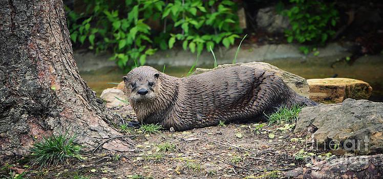 Rachel Barrett - River Otter