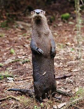 Paulette Thomas - River Otter Standing
