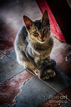 Charles Davis - Riverboat cat