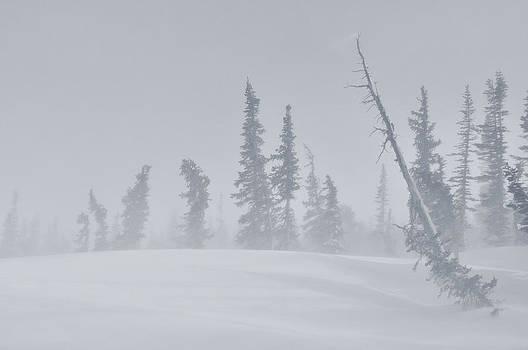 RMNP Storm by Adam Paashaus