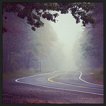 #road #fog #forest #whartonstateforest by A Loving