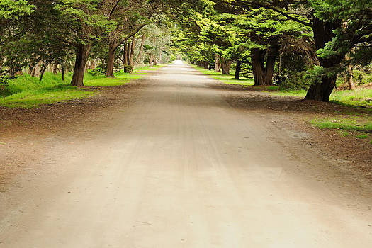Road in pine forest by View Factor Images
