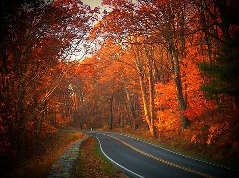 Road in the Park by Joyce Kimble Smith