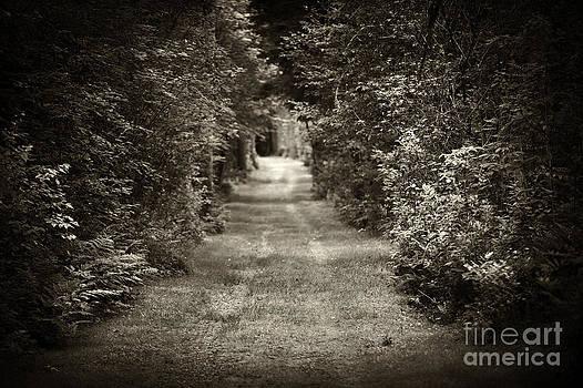 Elena Elisseeva - Road through forest