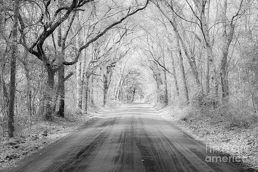 Dale Powell - Road to Angel Oak in Infrared