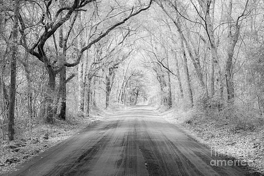 Dale Powell - Road to Angel Oak in Infrared