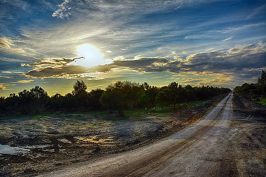 Road to the forest... by Ckworkshop