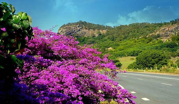 Road To Uki by Kevin Perandis