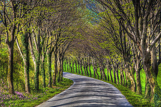 Road With Trees by Martin Joyful