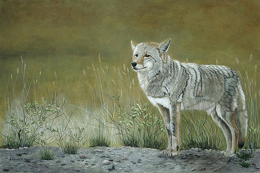 ROADSIDE WARRIOR-Coyote by Patricia Mansell