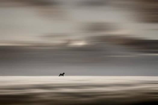 Roaming Free by Gary Smith