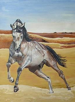 Roan Arabian Stallion by Karen Sharp