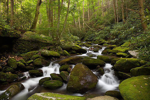Roaring Fork Motor Nature Trail by Tim Devine