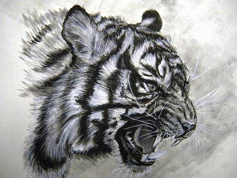Roaring Tiger by Lori Ippolito