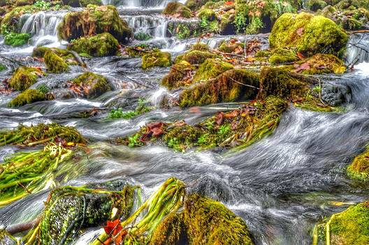 Roaring Water by Shawn Wood