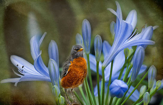 Ludmila Nayvelt - Robin in flowers