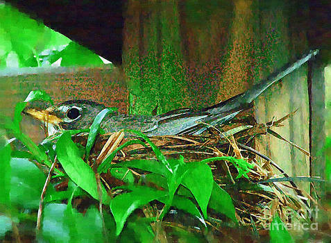 Robin Nesting by Margie Middleton
