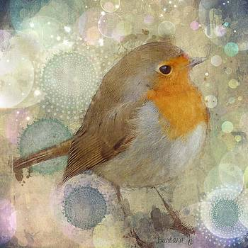 Robin redbreast by Barbara Orenya
