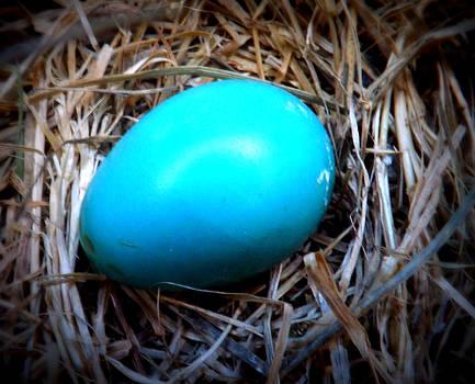Robin's Egg by Michael Sokalski