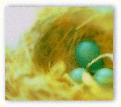 Rosemarie E Seppala - Robins Eggs In Nest