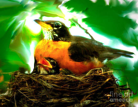 Robins by Fred L Gardner