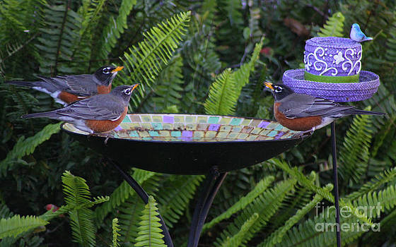 Robins in bird bath by Robin Maria Pedrero