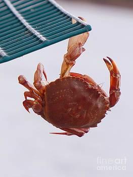 Christine Stack - Rock Crab on a Lobster Pot