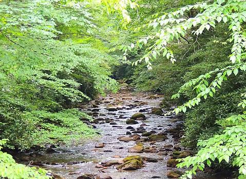 Rock Creek by Judy  Waller