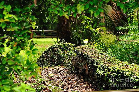 Wayne Nielsen - Rock Garden Bridge
