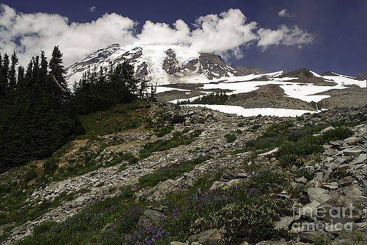 Tim Moore - Rock Gardens on Mount Rainier