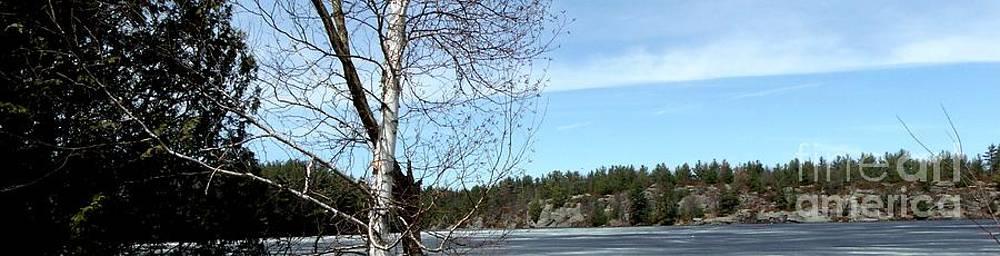 Gail Matthews - Rock Island with Trees landscape