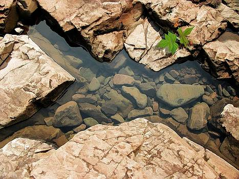 Rock Puddle by Jon Smithers