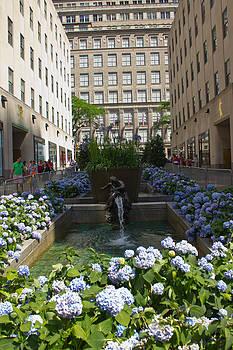 Rockefeller Plaza Garden by Jose Oquendo