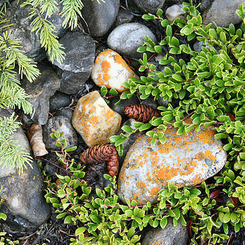 Rocks and Lichen by Karen Lindquist