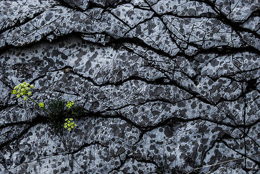 Rocks by Grebo Gray